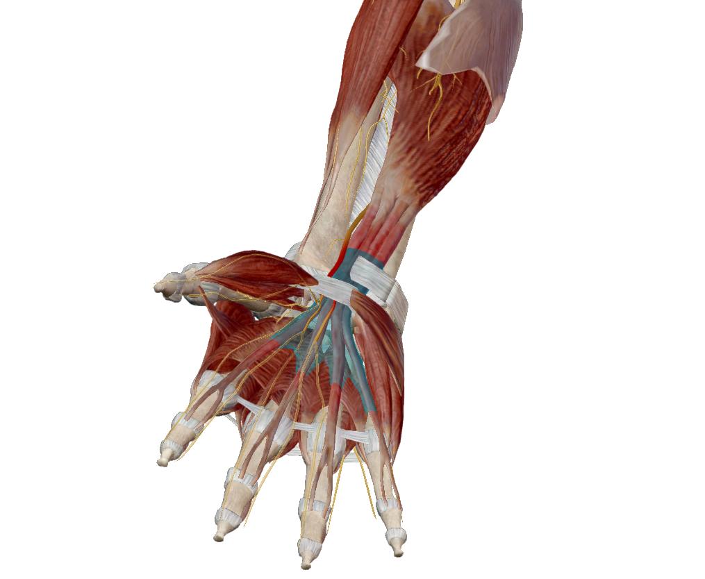 úszás arthrosis a vállízület