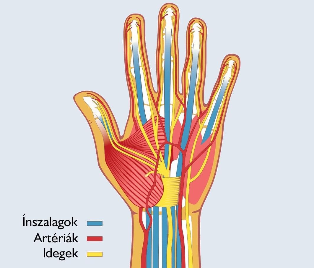 ptigroup.hu -Traumatológia, kézsebészet