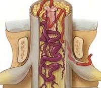 A legjobb kenőcsök a gerinc osteochondrosisára