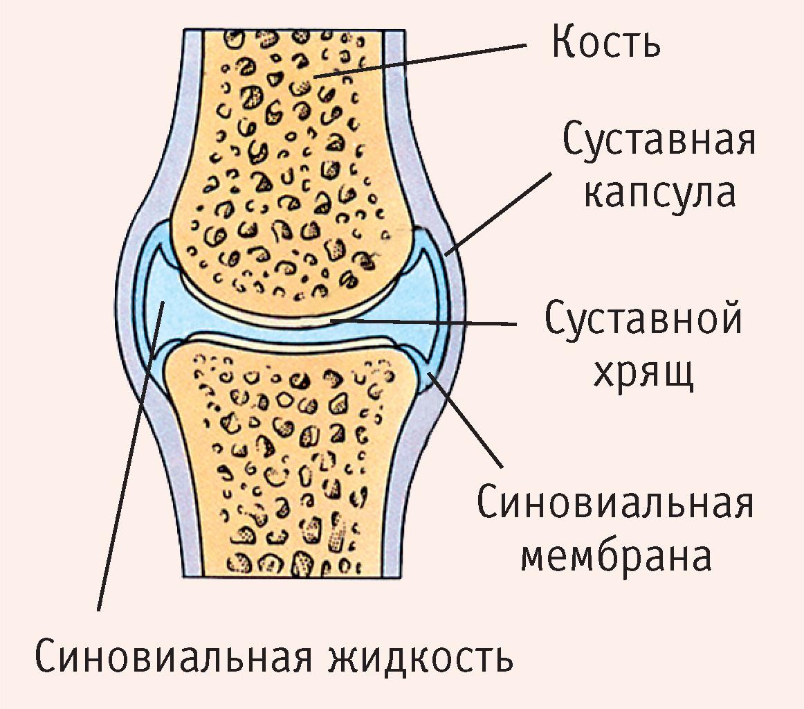 a bokaízület szinovitisz)