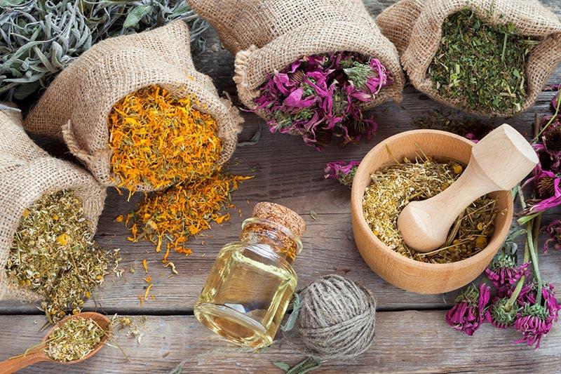 gyógynövények gyűjtése artrózis kezelésére
