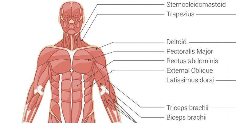 Vállfájdalom - Reumatológus és gyógytorna