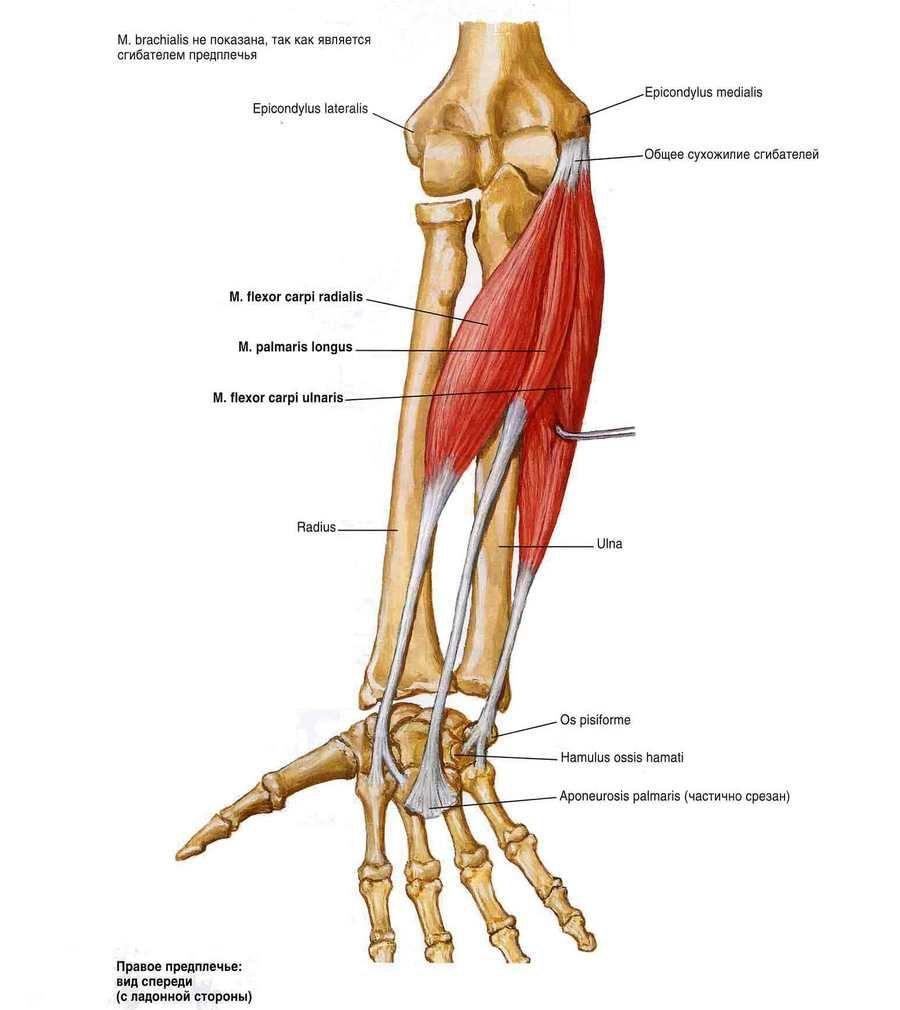 mi a könyökízület artrózisának kezelése)
