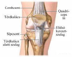 térdízületek osteochondrosis kezelése