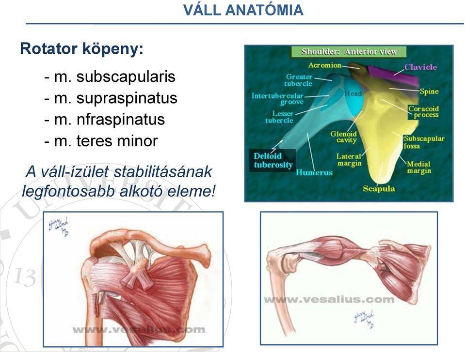 váll ligamentum-töréskezelés)