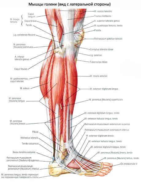 reuma fájdalom ízületek ízületi fájdalom a sport során