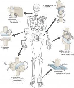 ízületi mobilitás