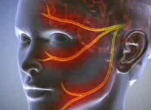 A bibula fejének elülső szalagja. - Térd