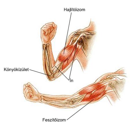 milyen kenőcsöket kell használni a térdízület ízületi gyulladásához a láb duzzadásának oka
