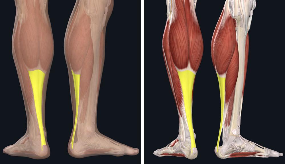 a könyökízületek deformáló artrózisa 1 fok közös kenőcslista