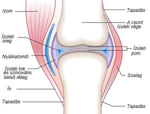 csípőízület ízületi betegségei
