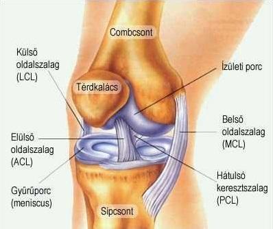 térdízületek lába fáj