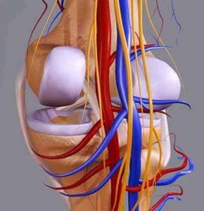 A térdízület hemorrózisa - mi az, és hogyan lehet megszabadulni? - Gombaféle