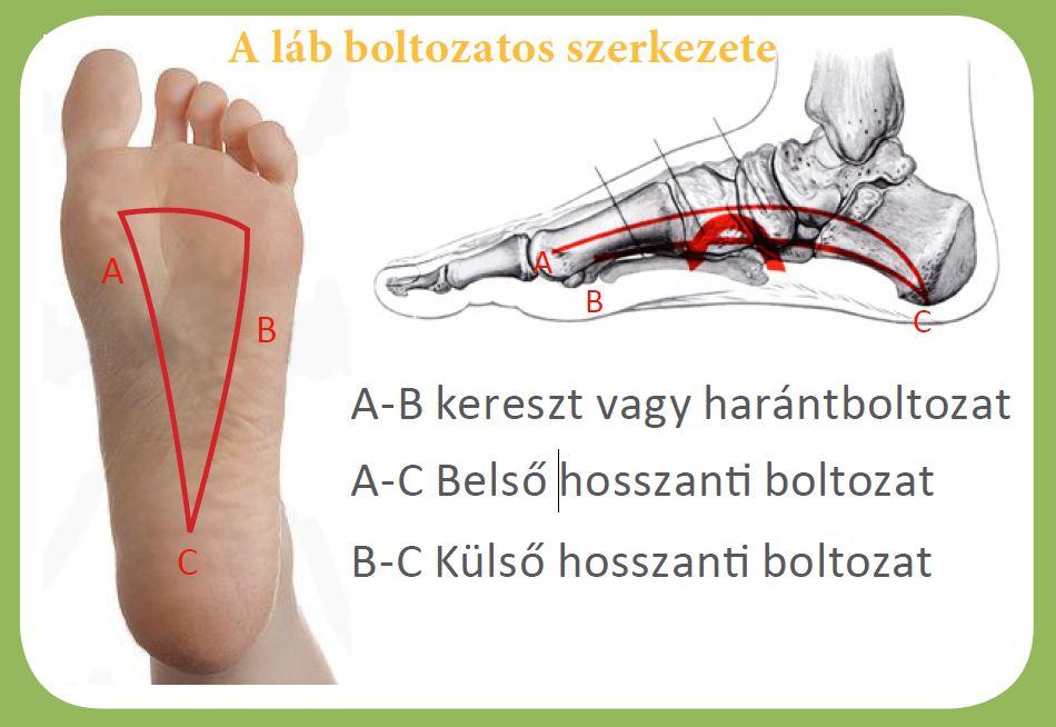a lábujjak ízületei és kezelése