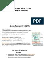 csontritkulásos gyógyszerek az osteochondrozis árán)