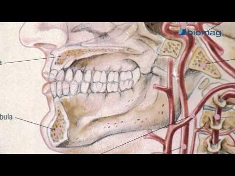 a csípőízületi gennyes artritisz
