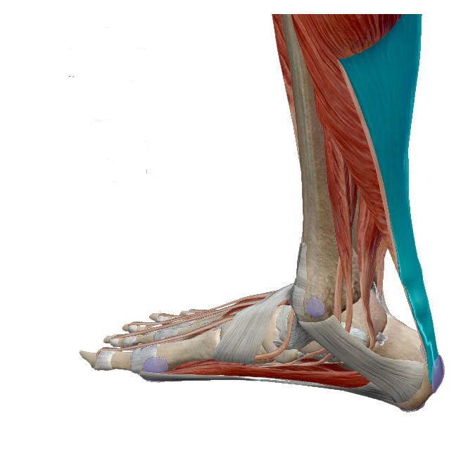 a láb ízületei fájnak a kocogás után