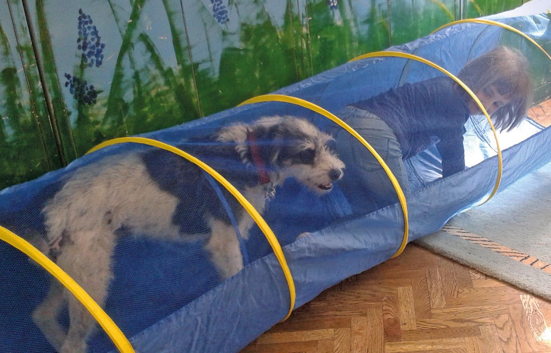 közös kutya előkészítése)