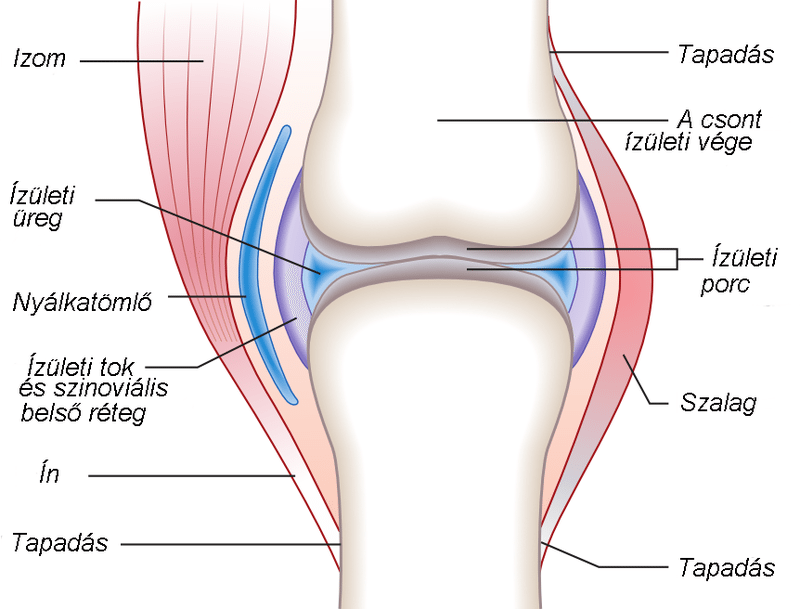 fájdalom ízületi struktúra