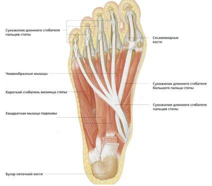 a lapos lábak okozta lábízület kezelése