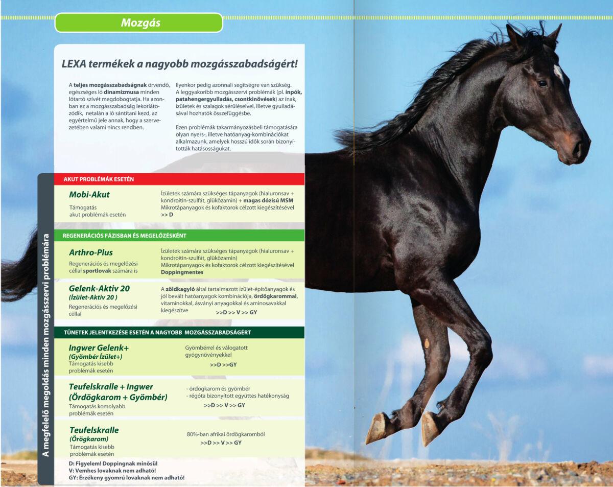 lovak ízületi fájdalmainak kezelésére implantátumok a térdízületen