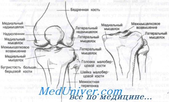 mozgatáskor a térdízület fájdalma)