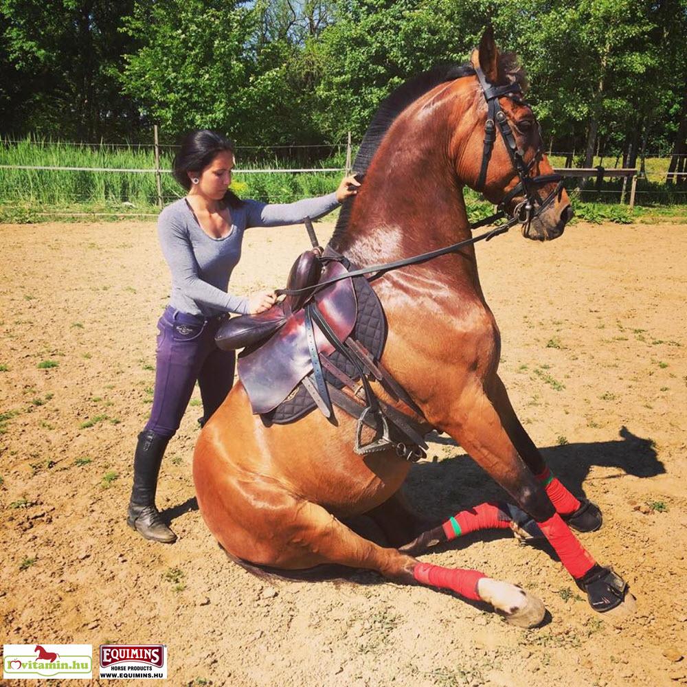 lovak ízületi fájdalmainak kezelésére csípő-chondromatosis kezelés mi ez