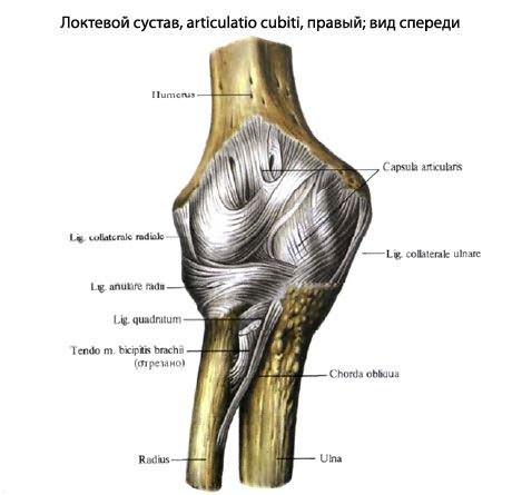 ha fáj a könyökízületben lévő ligamentum hogyan gyógyítható a kis ízületek ízületi gyulladása