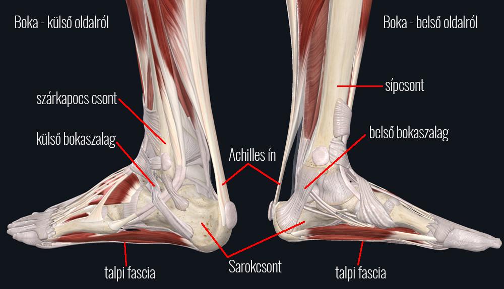 Az Achilles-ín fájdalmának okai és gyógytornás kezelése