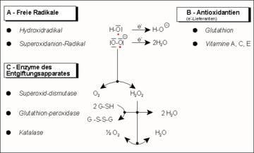 ízületi nitrogénkezelés