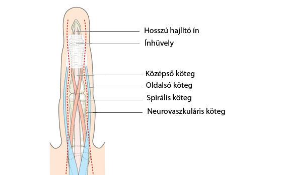 Betekintés: Reumatológia jegyzet