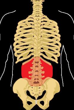 fájdalom a gerinc és az ízületek orvosa)