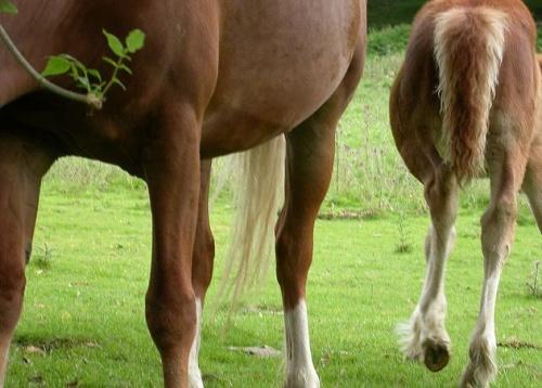 lovak ízületi fájdalmainak kezelésére kurpatov gyógyszerek a fejfájás és az osteochondrosis kezelésére