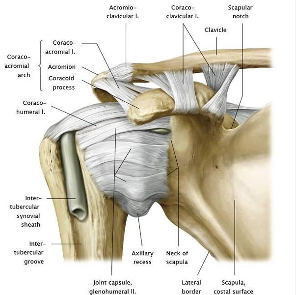 a clavicularis vállízület ízületi gyulladása