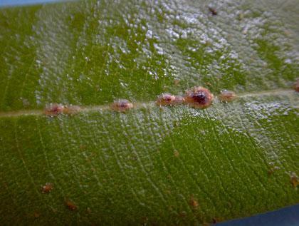 fa tetvek ízületi fájdalmakhoz cseppek ízületi gyulladás esetén