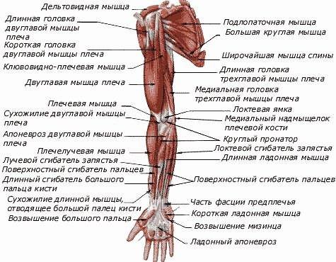 fájdalom a boka ízületében és oszteokondrozis