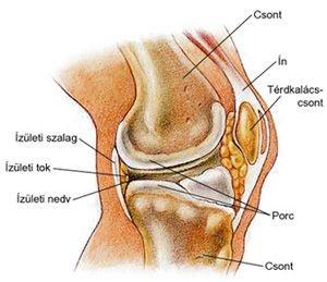 ahol a térd artrózisát és ízületi gyulladását lehet kezelni