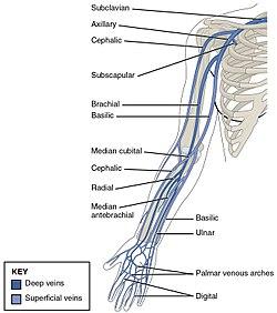 brachialis artrózis okai ízületi gyulladás artritisz kezelése