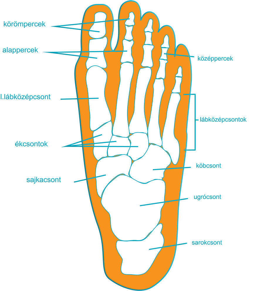 a láb ízületei fájdalmas kezelést