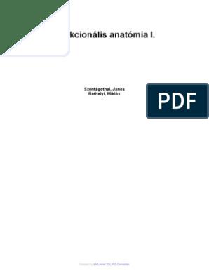 Funkcionális anatómia I. | Digitális Tankönyvtár