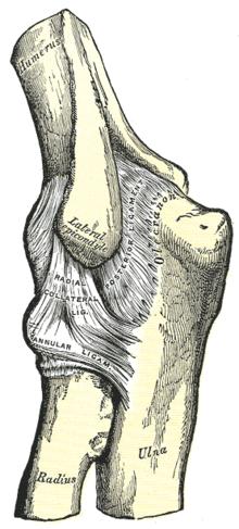a könyökízület izom sérülései