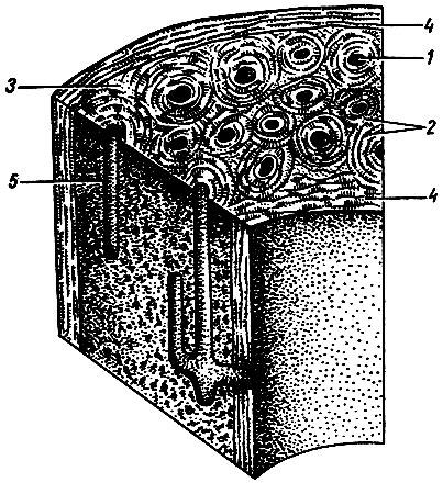 a kötőszövet reparatív regenerációja)