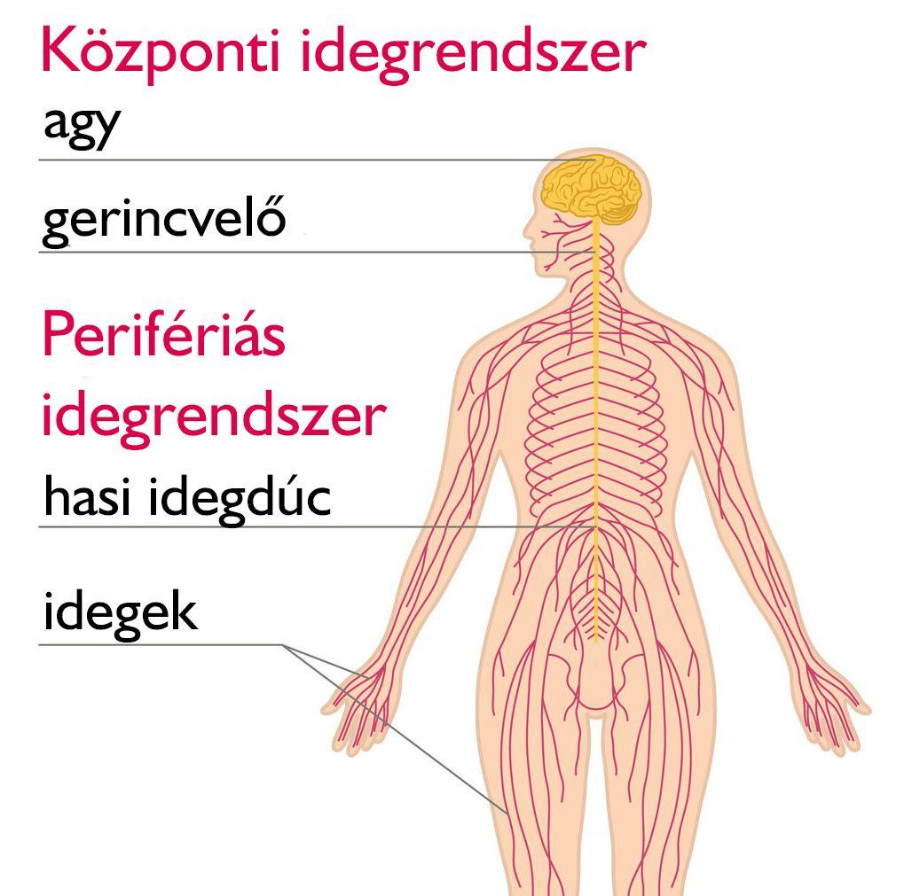 Ezek a betegségek okozhatnak fartáji fájdalmat