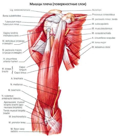 hogyan fejleszteni a vállízület artrózisát)