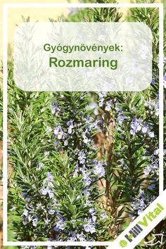 porc regeneráló gyógynövények)