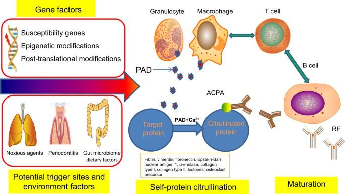 közös kenőcslista chondroitin vitamin glükózamin vélemények