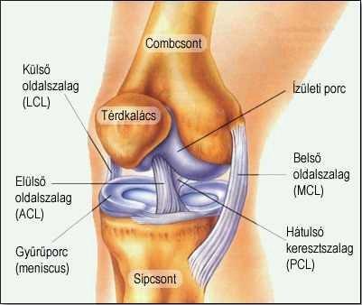 szalagok és ízületek gyulladása helyreállítani az ízületeket rheumatoid arthritisben