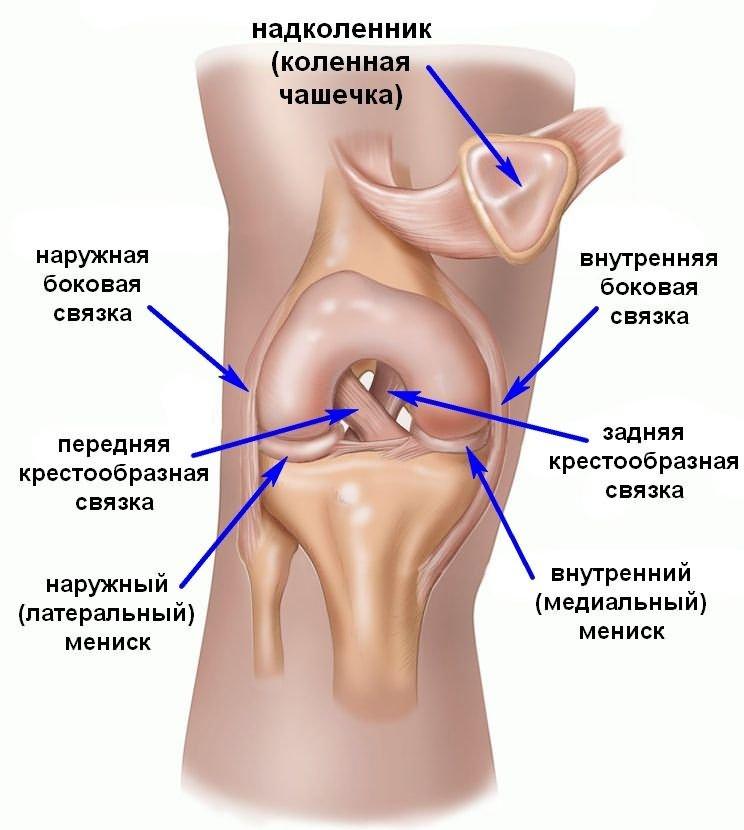 térdízület trauma hátsó fiók)