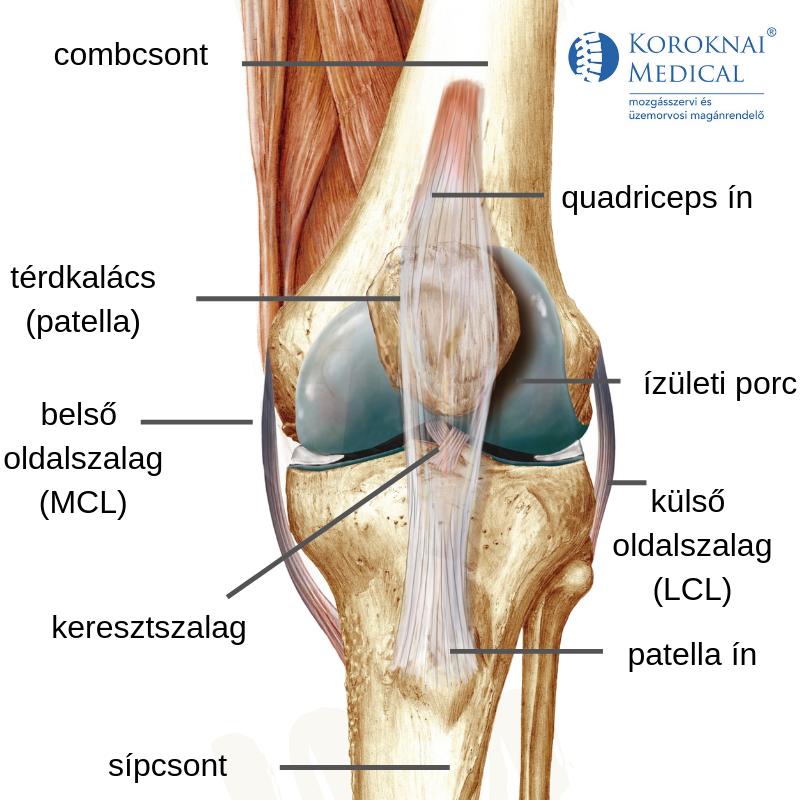 ízületi fájó térd, mit kell tenni fájdalom a csípőízületek nyomásakor