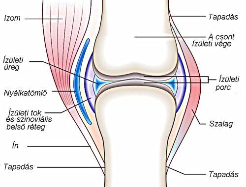 ízületi károsodás tünetei 1. fokozatú térdbetegség